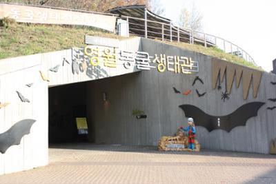 영월 박물관으로의 여행